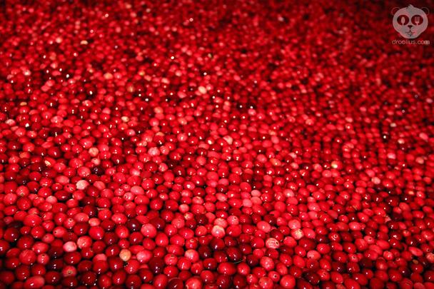 Ocean Spray Cranberry Bog Epcot Food & Wine Festival