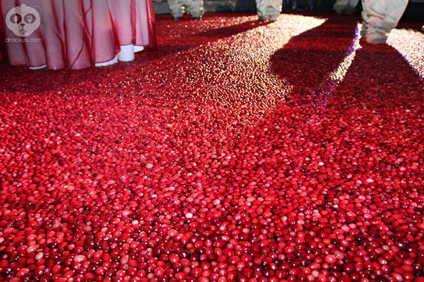 Ocean Spray Cranberry Bog at Epcot Food & Wine Festival 2013