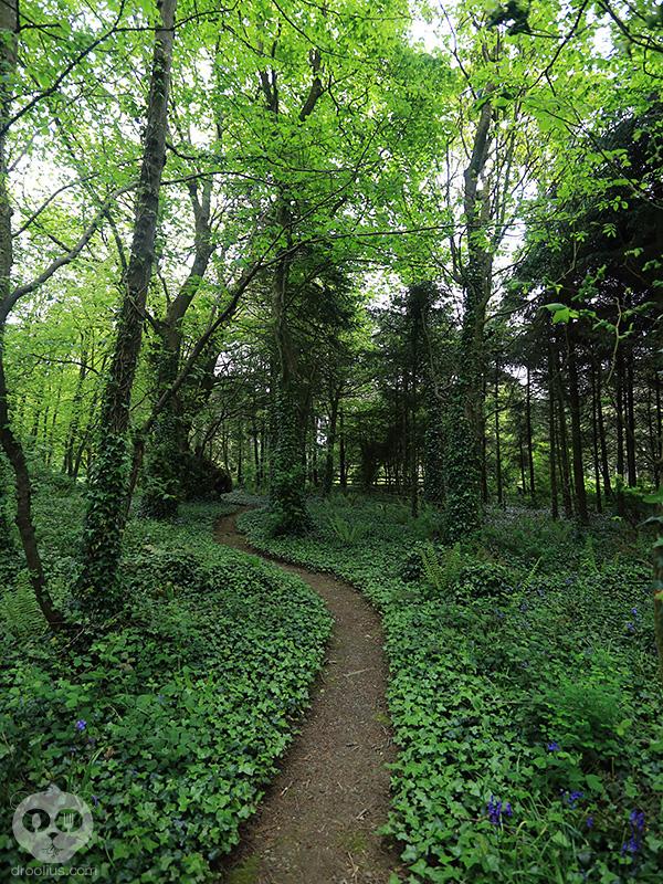 Raglan Road Trip Ireland